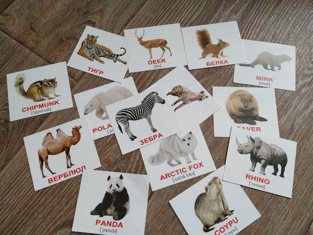 Карточки на английском животные
