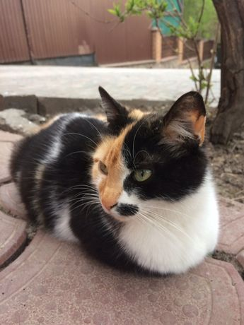 Кітка шукає дім