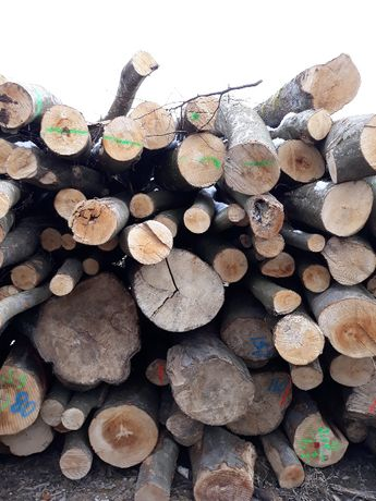 Drewno BUK, SOSNA, OPAŁ, Papierówka