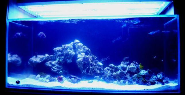 Zestaw akwarium morskie sump stelaż 120/60/50