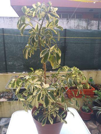 Planta de interiores e exteriores