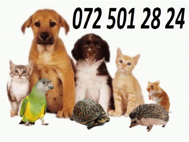 Зоогостиница (передержка) для домашних питомцев