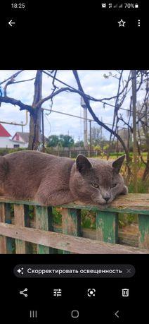 Потерялся кот Хортицкий микр