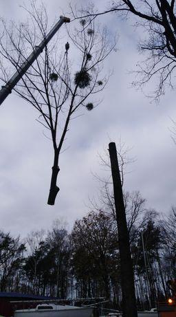 Najtańsza wycinka drzew w regionie!!! Usługi alpinistyczne, rembak
