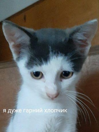 Котенок  Мальчик  4мес.