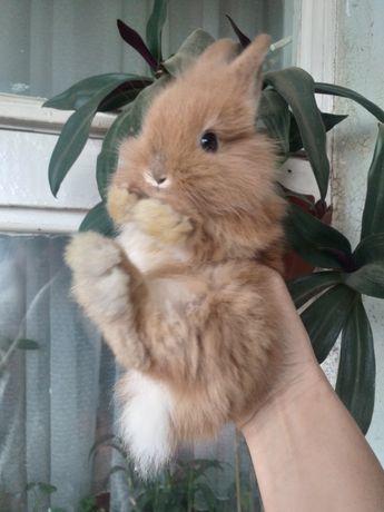 Домашние декоративные кролики маленькие очень красивые