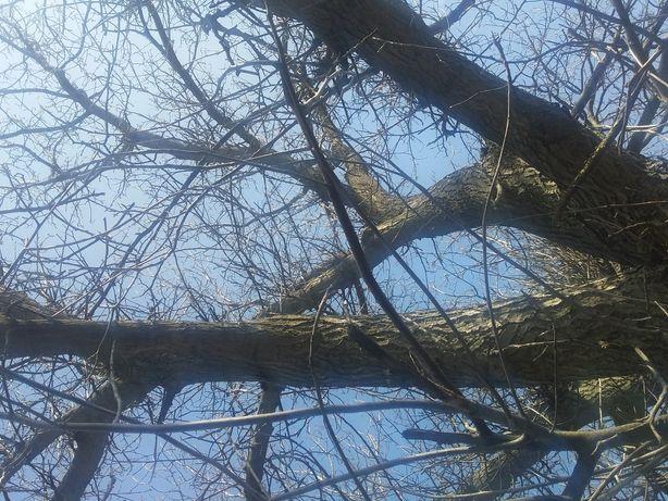 Дерево орех продам