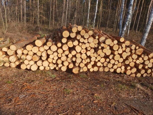 Drewno drzewo kominkowe i opałowe sosna Dąb brzoza możliwy transport