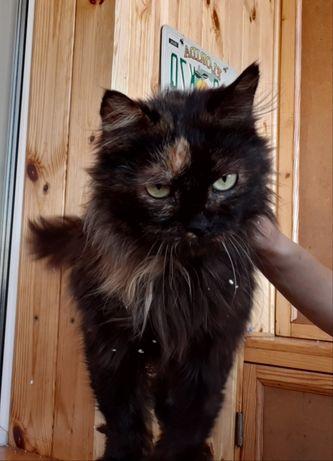 Отдам кошку черепахового окраса ,стерилизована ,1 год