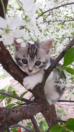 Котята в хорошие руки