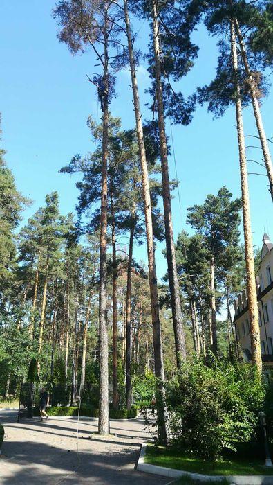 Кранирование деревьев,дробление,удаление пней,озеленение,дробление,под Киев - изображение 1