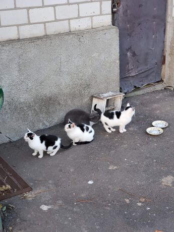 Котики, кошечки на выбор