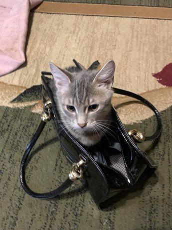 Котенка в надежные рукуи