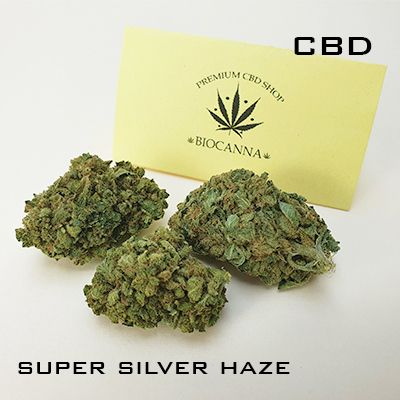 critical mass, amnesia, mango haze, pineapple CBD - biocanna.shop