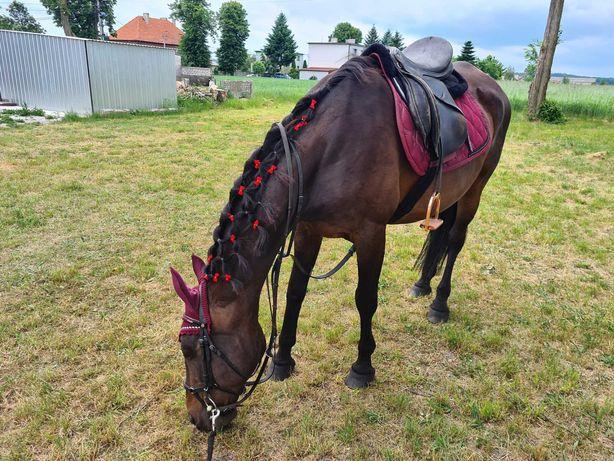 Udostępnie konie na jazdy w teren