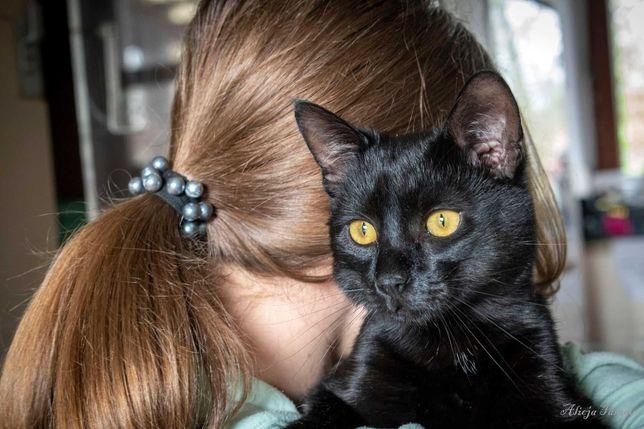 Syriusz czarny piękny kot