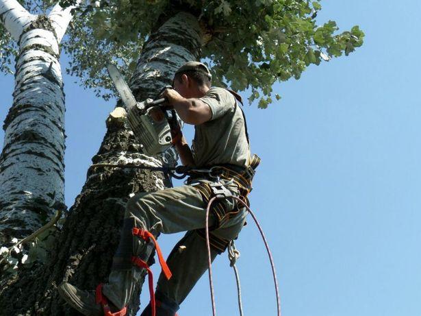 Спилить дерево в Одессе.Пользуйтесь услугами профессионалов.
