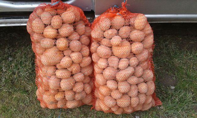 Ziemniaki jadalne żółte na oborniku