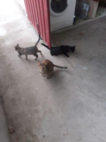 Dou gatos  por motivos de saúde