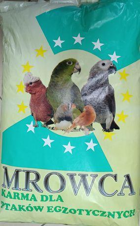 MROWCA - Papuga Agapornis