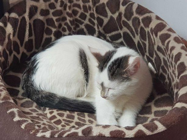 Daria  koteczka do adopcji