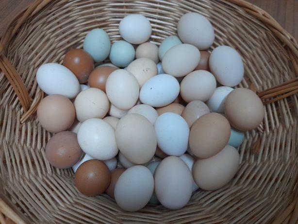 Ovos de galinha caseiros