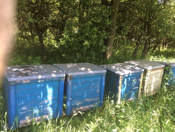 Sprzedam ule drewniane wraz z pszczołami