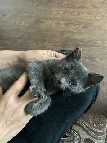 Пепельный котенок ищет дом!
