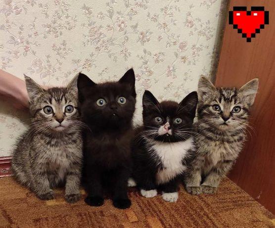 Котята срочно ищут дом!