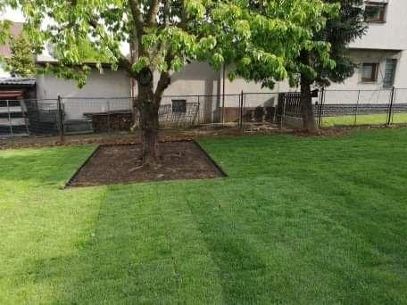 Trawa rolowana trawa z rolki