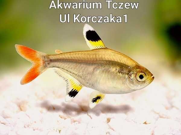 Prystelka ul Korczaka 1