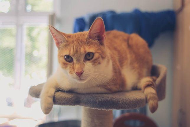 Nadir – biało- rudy przystojniaczek szuka domu!