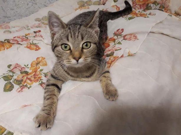 Кошечка-подросток Масяня, 5 мес. Стерилизована.