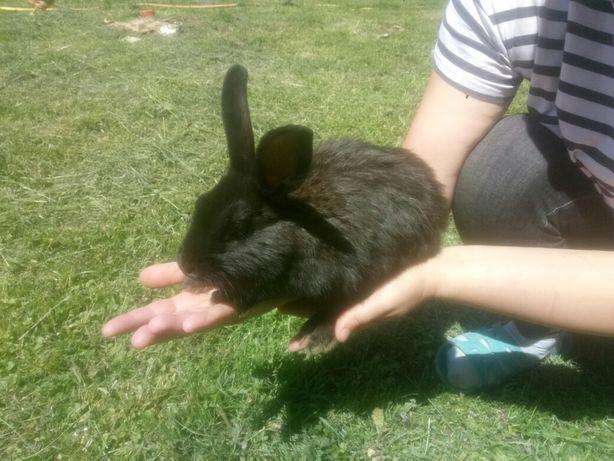 кролики, кролі , молодняк