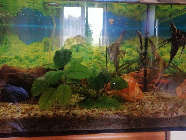 Witam, sprzedam akwarium wraz z rybami i osprzętem
