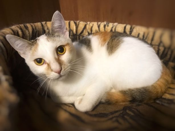 Красивая и добрая кошка ШАКИРА ищет дом!