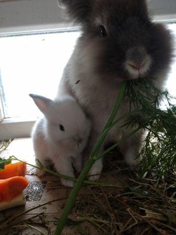 Милые кролики детки