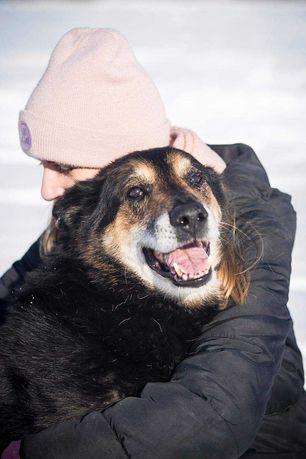 Feliks to starszy pies ale czy to znaczy że gorszy? Uratuj staruszka!