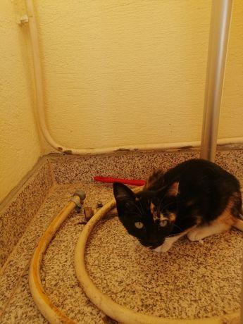 Gatinhos para Adoção - 3 Meses