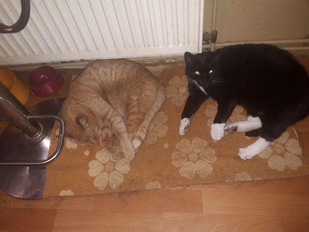 Zaginęły dwa koty w Sławnie!
