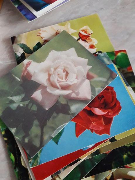 Продам коллекцию открыток с изображением цветов
