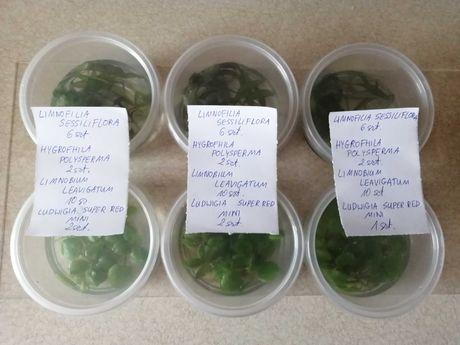 Rośliny akwariowe z przycinki oddam za darmo.