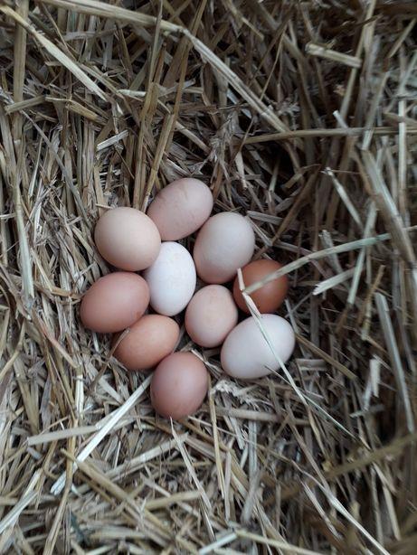 Jaja swieze