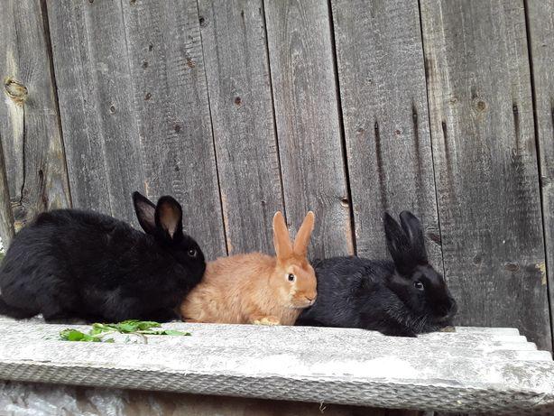 Продам різних кроликів