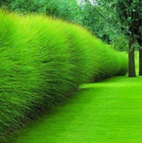 Газон 45 видов травосмесь семена спорт мини трава жаростойкая Насiння