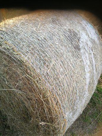 Siano w belach od rolnika z lucerny
