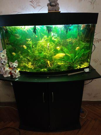 Аквариум с рыбками 100 л