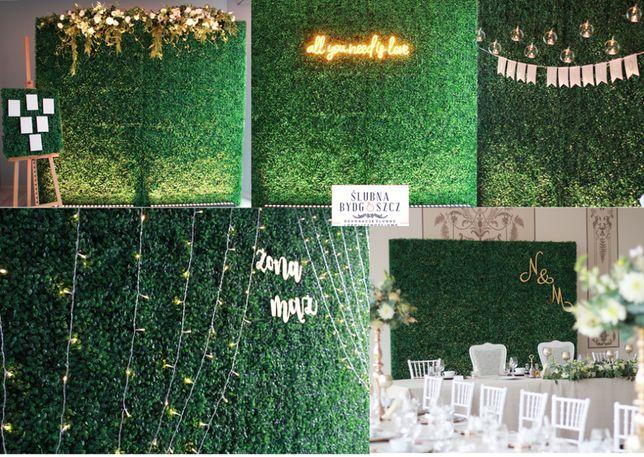 Ścianka zielona bukszpanowa na wesele,tło za parą młodą,ścianka weseln