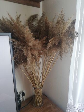 Trawy ozdobne do wazonu