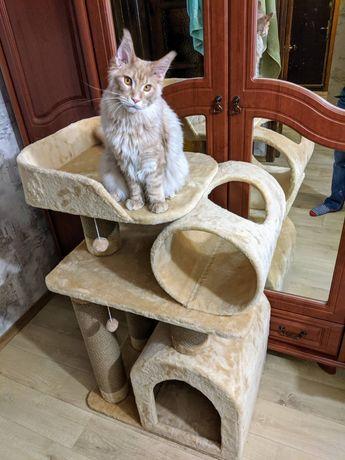 Когтеточка для Мейн-Куна! Дряпка, когетка, дом для кота, когтедралка !